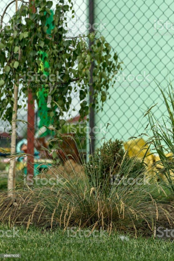 Photo libre de droit de Jardin Dornement À La Maison En Été Plein De  Plantes banque d\'images et plus d\'images libres de droit de {top keyword}