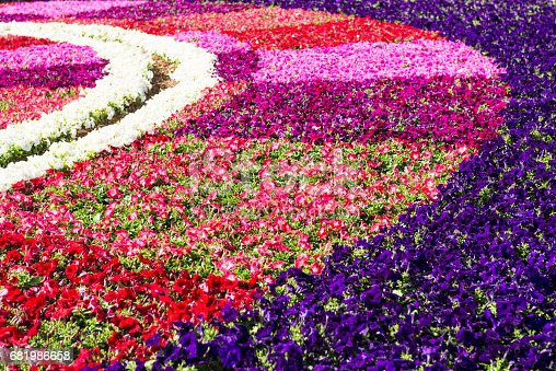 Close up of Ornamental Garden with colorful flowers in Valetta, Malta