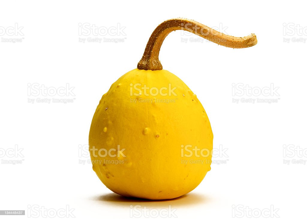 Ornamental gourd stock photo