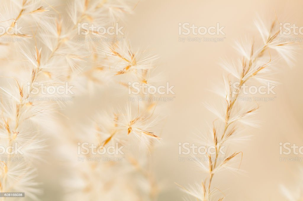 Ornamental grass close up stock photo