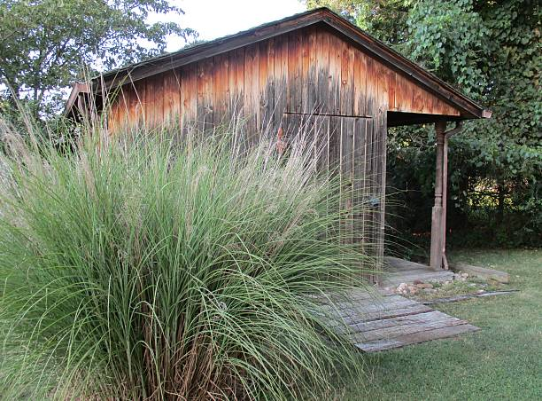 Ornamental Grass Growing Near an Old Wooden Shed stock photo