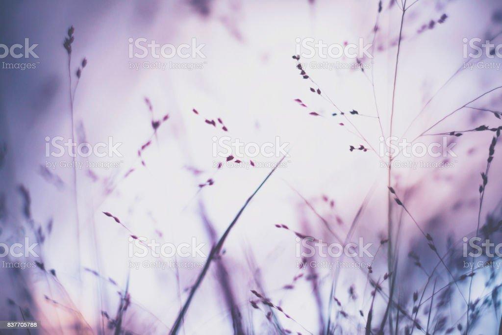 Ornamental grasses in natural sunlight. Flower Immersion stock photo