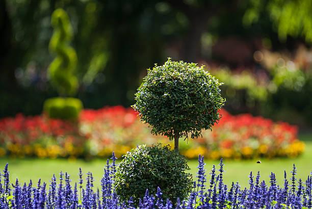 parc modèle jardin - buis photos et images de collection