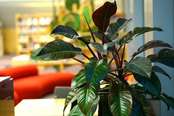 라트비아 국립 도서관에서에서 관 상용 식물 - 관상용 식물 뉴스 사진 이미지