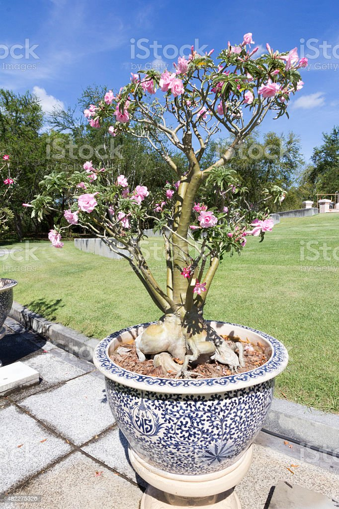 Ornamental Plantpots On Stands Stock Photo Download Image Now Istock