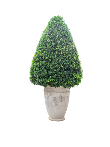Ornamental plants in pot,isolated on white background with clipping path. stock photo