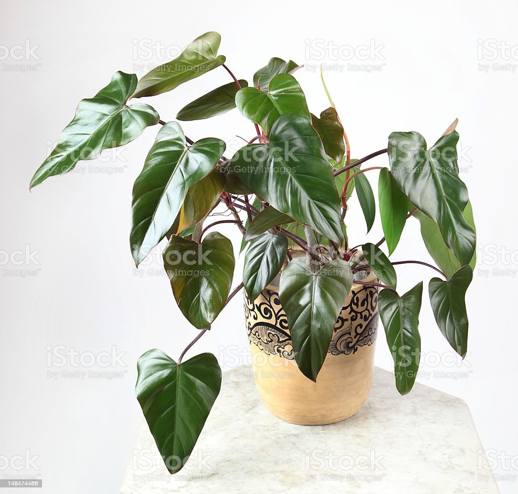 Ornamental Plants royalty-free stock photo