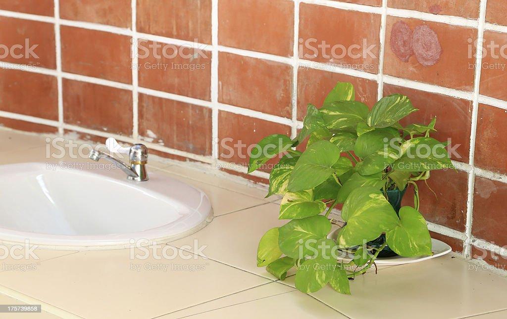 ornamental plants with basins royalty-free stock photo