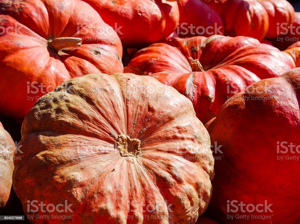 Ornamental pumpkins stock photo