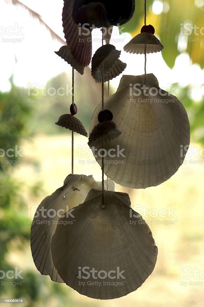 Ornamental Seashells royalty-free stock photo
