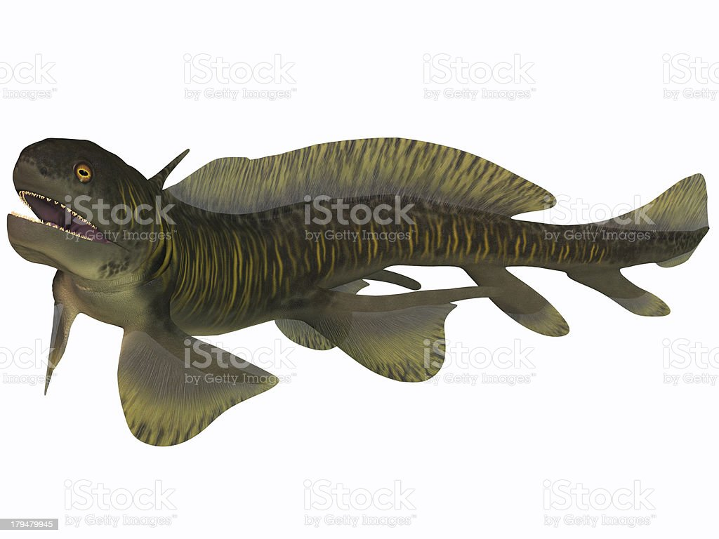 Orthacanthus on White stock photo