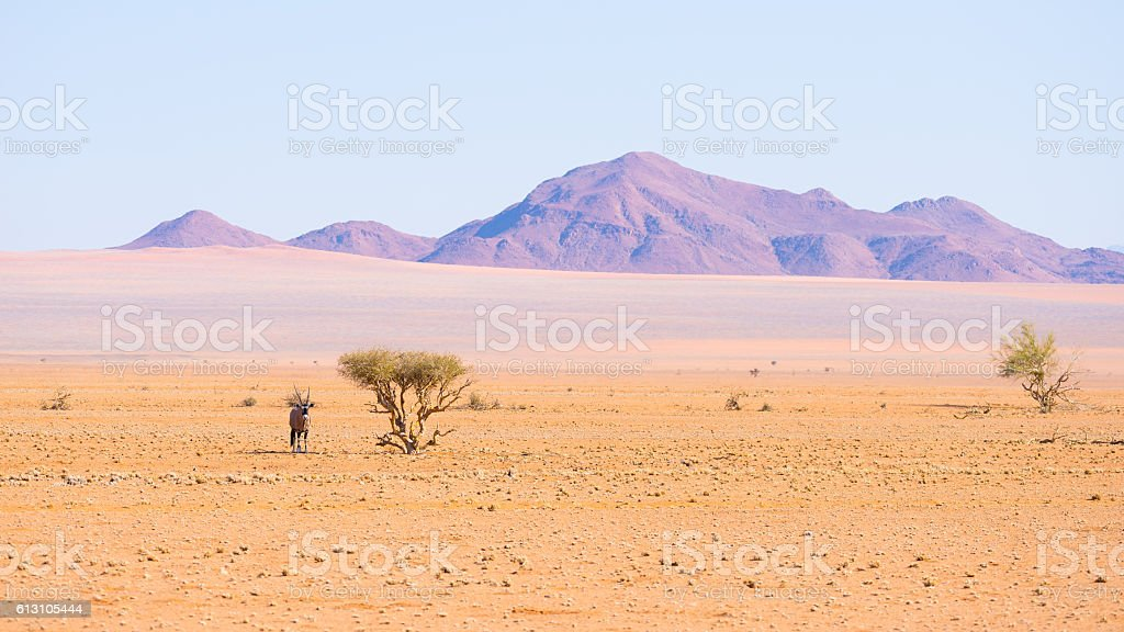 Oryx in the Namib Naukluft National Park, Namibia, Africa stock photo