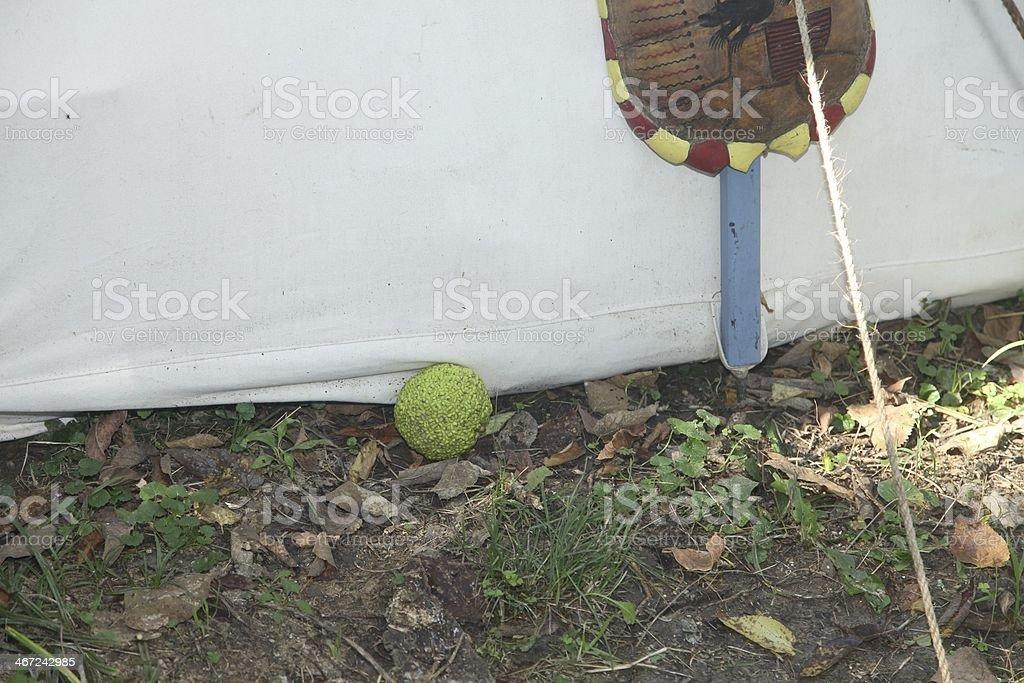 Osage Orange - Insect Repellant stock photo