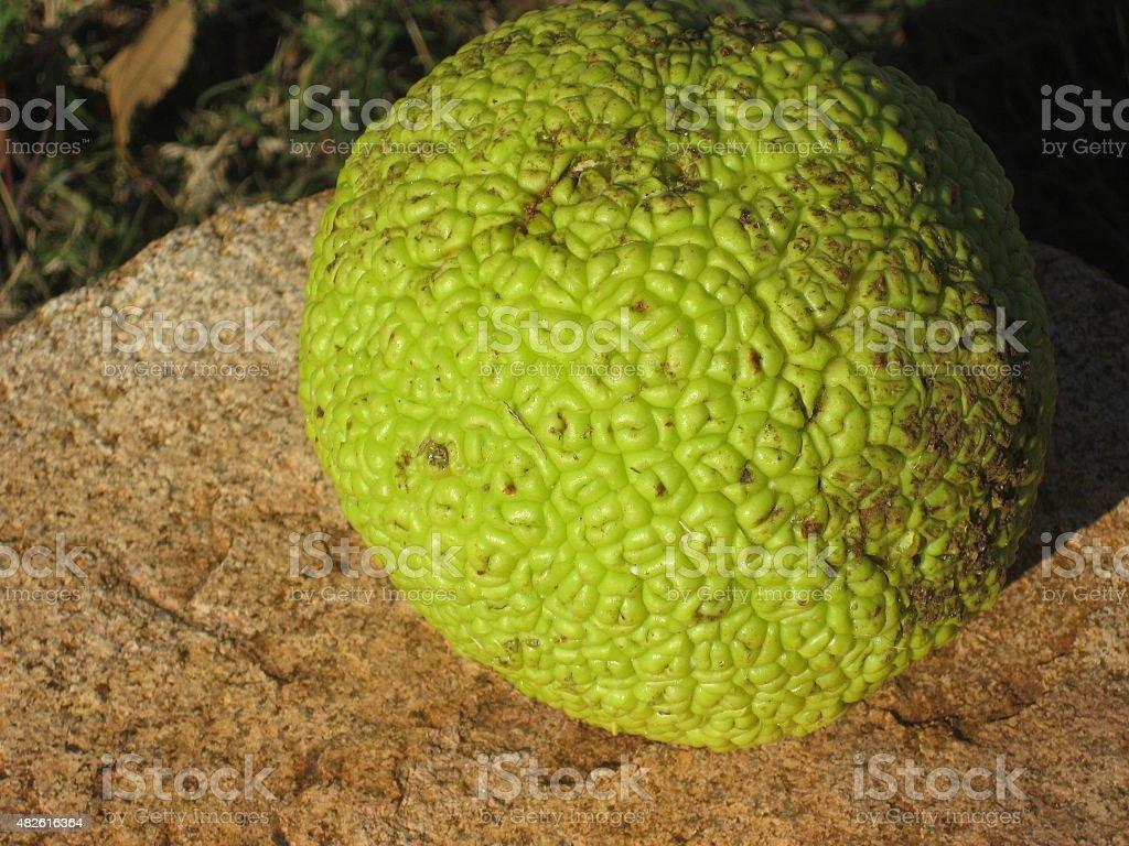 Osage Orange stock photo