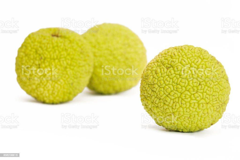 Osage Oranges (Maclura) isolated on white stock photo