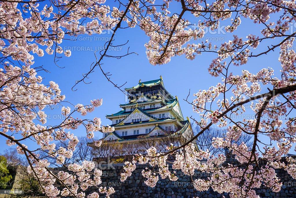Osaka castle in cherry blossom season, Osaka, Japan stock photo