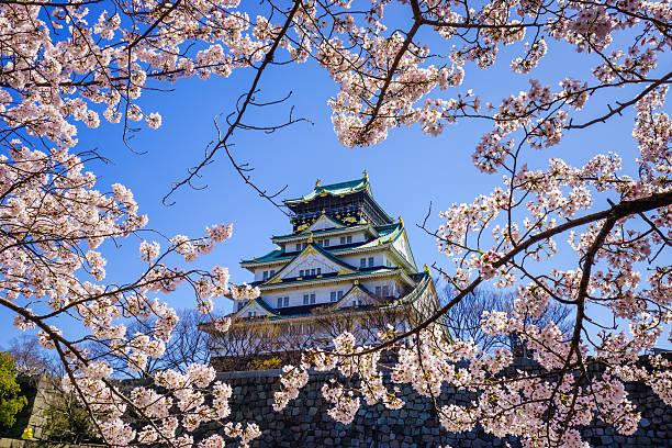 Osaka Schloss in Kirsche Blumen blühen Saison, Osaka, Japan – Foto