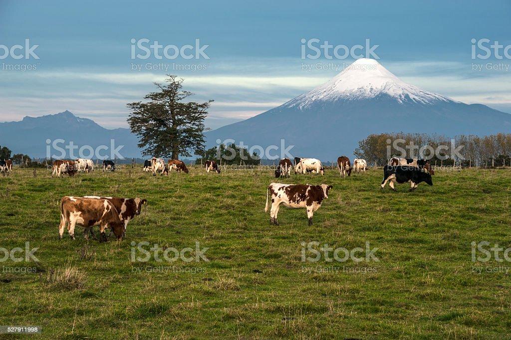 Osorno Volcano, Lake Region, Chile stock photo