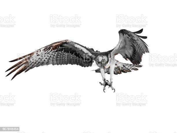 Osprey picture id907848454?b=1&k=6&m=907848454&s=612x612&h=zwcp150xd7r8rs2almrhnr8v60xjprr4a1wrfe9ub o=