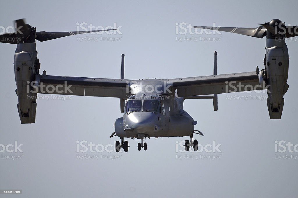 Osprey - Ready for action royalty-free stock photo