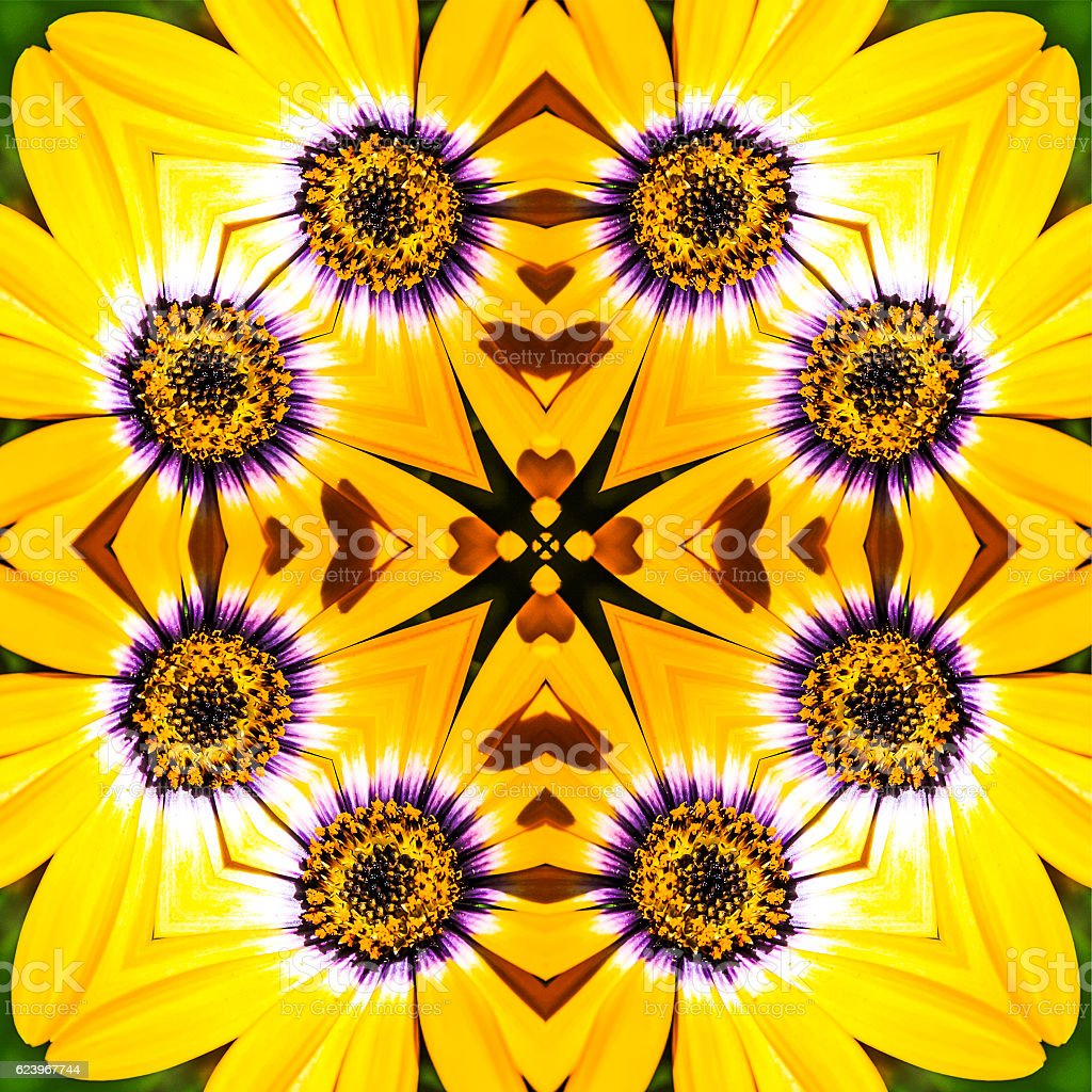 Osteospermum Mandala stock photo