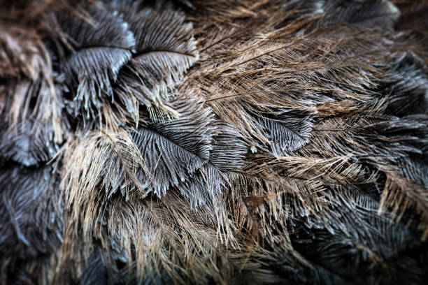 Ostrich bird feather brown texture background stock photo