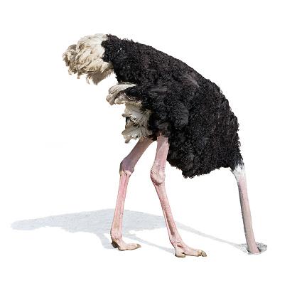 ostrich-burying-head-in-sand-ignoring-pr