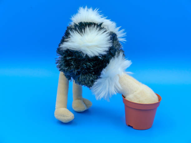 Ostrich burying head in the sand A fluffy toy ostrich standing with its head buried, against a blue background head in the sand stock pictures, royalty-free photos & images