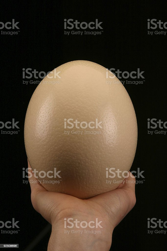 Ostrich egg - grip royalty-free stock photo