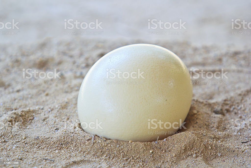 Ostrich egg on the sand stock photo