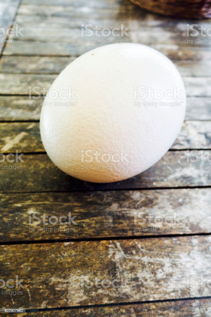 Ostrich Egg stock photo