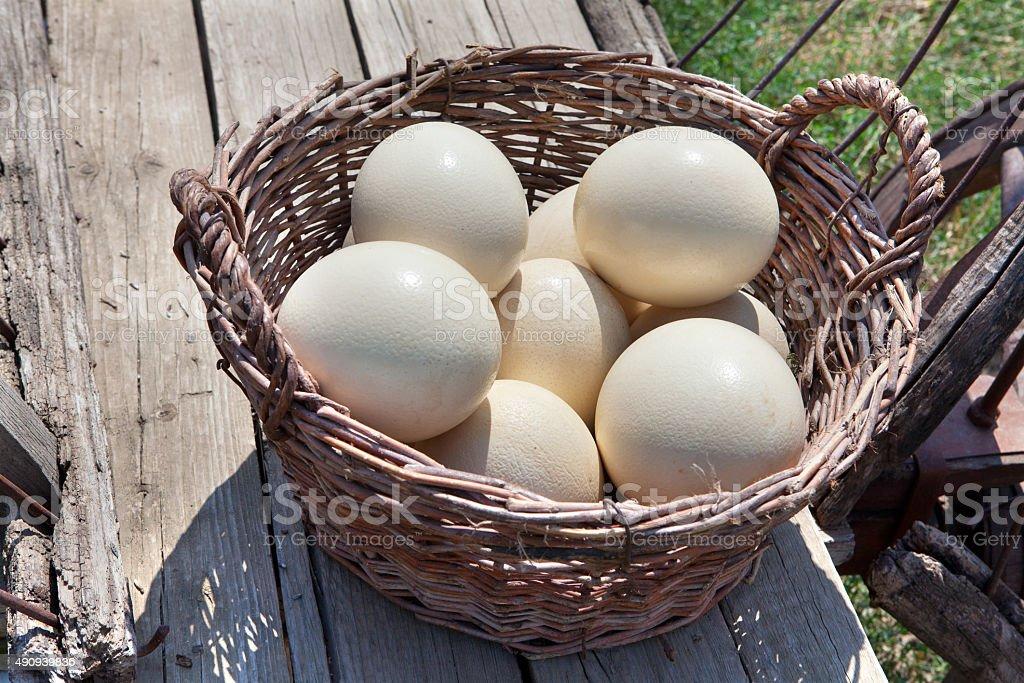 ostrich eggs stock photo