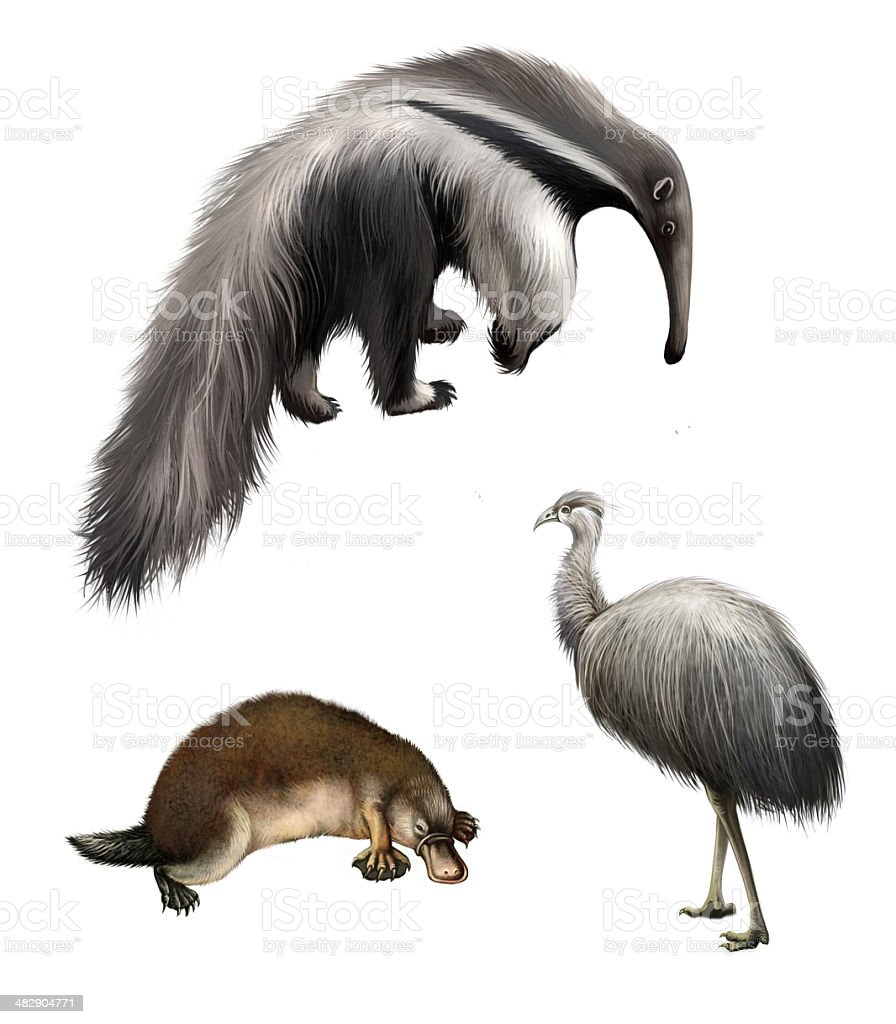 Ostrich Emu, echidna, Giant anteater Isolated illustration on white background stock photo