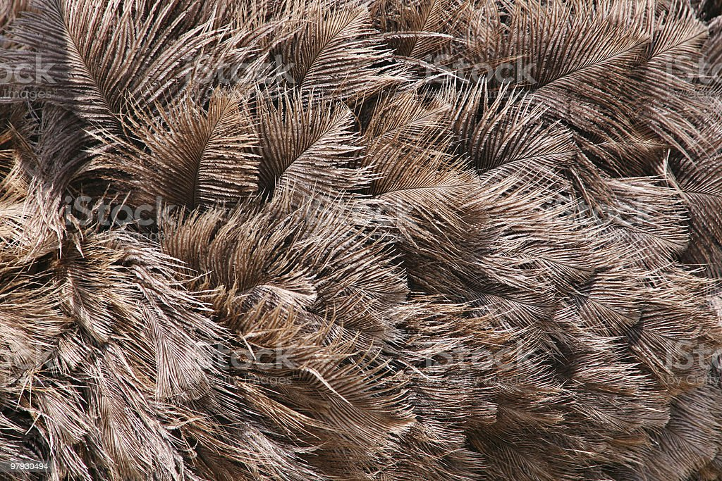 Ostrich feather royalty-free stock photo