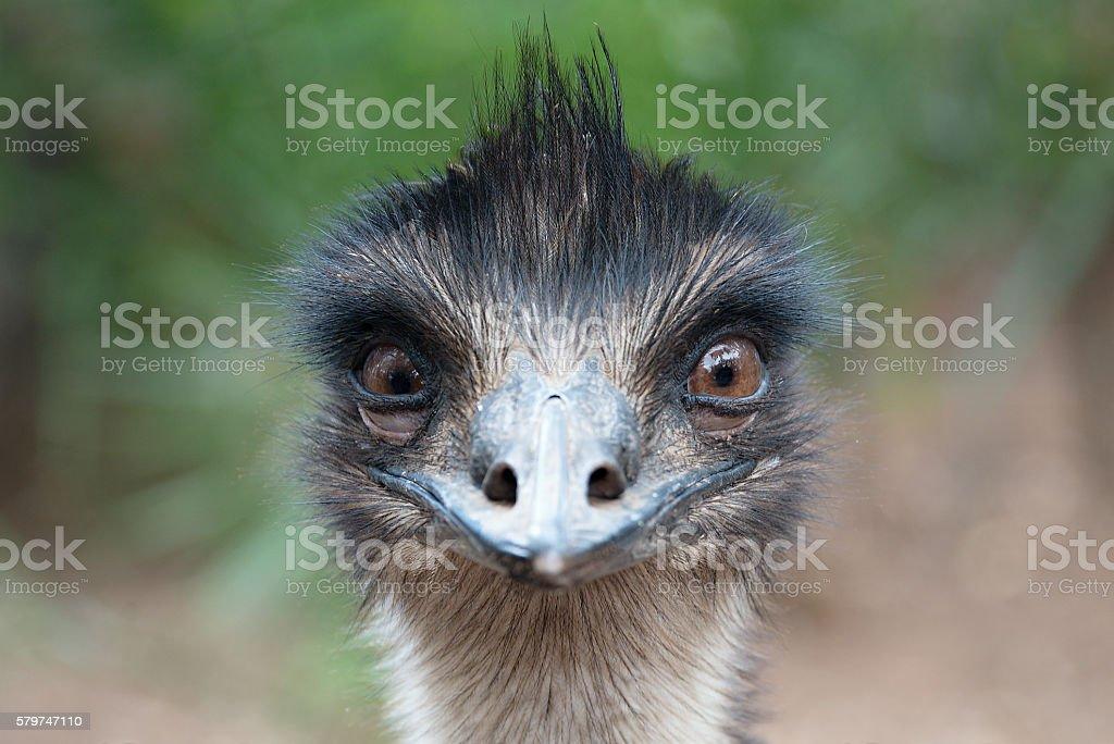 Ostrich head closeup outdoors stock photo