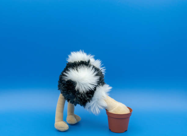 Ostrich standing against blue background A toy ostrich bent over burying its head in the sand, in the form of an empty flower pot, while standing against a plain blue background, with space above the ostrich for text or a caption to be added. head in the sand stock pictures, royalty-free photos & images