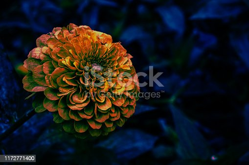 A cool photo manipulation of a marigold
