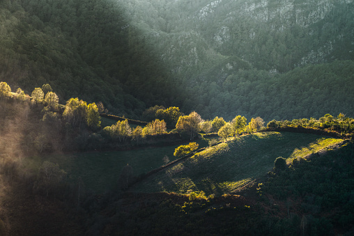 Oto-o-lights, woods and mountains