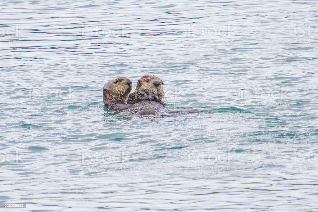 Otter mother with her youngster stock photo
