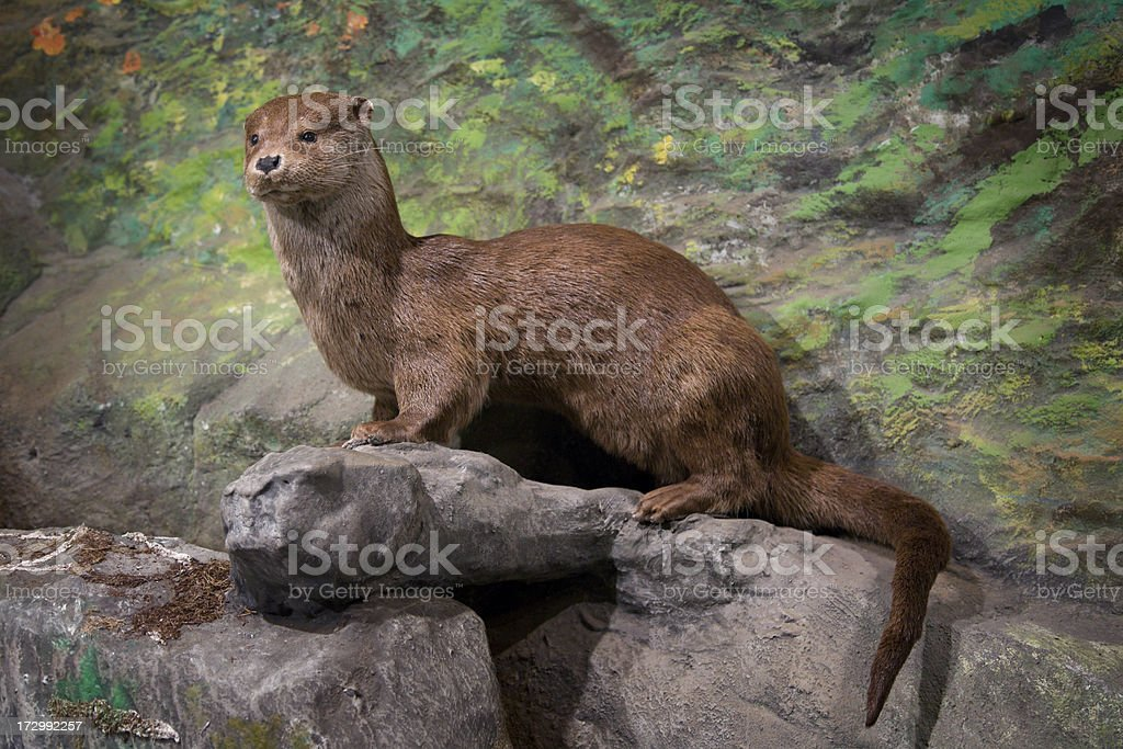 Otter-More animal pictures below.. stock photo
