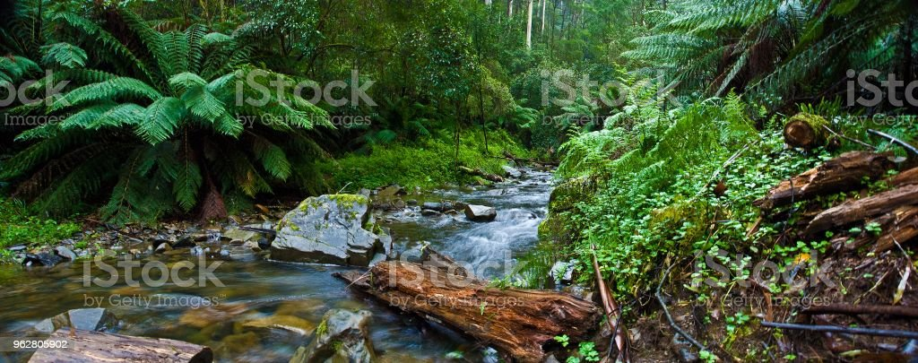 Floresta tropical Otways - Foto de stock de Apollo Bay royalty-free