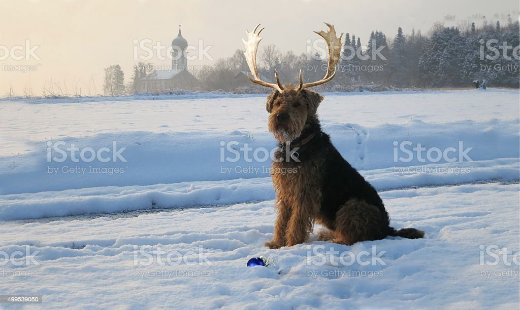 Our Airedale Terrier - Collage as  Christmas dog stock photo