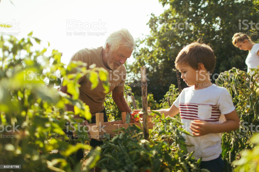 Our organic garden stock photo
