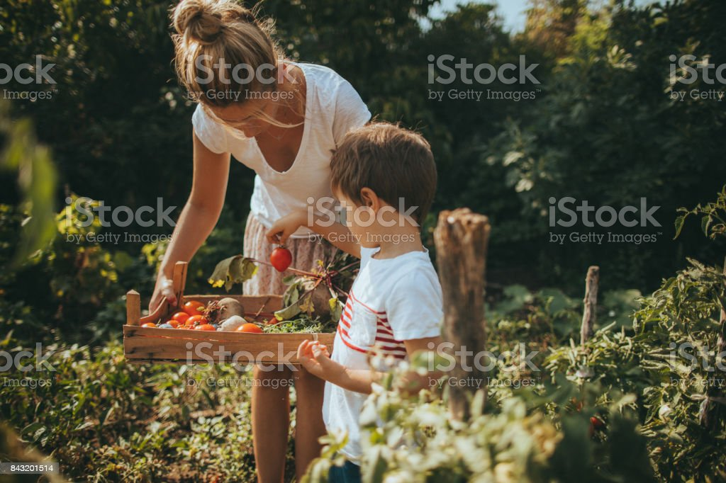 Our organic vegetables stock photo