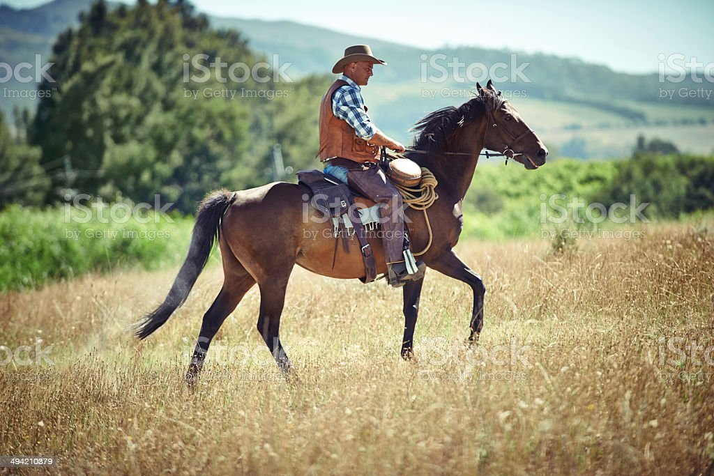 Out for a trot royalty-free stock photo