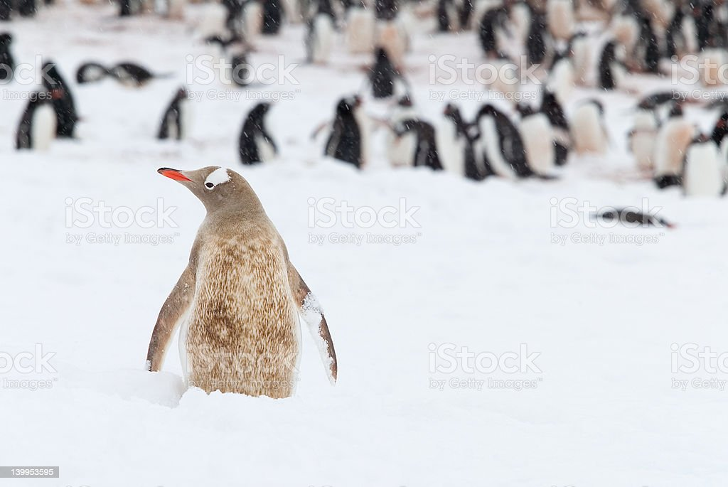 Out in the Cold - Royalty-free Antarctica Stock Photo