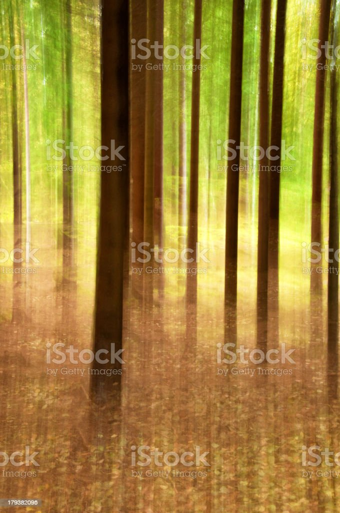 Out of focus Pine forest royalty-free stock photo