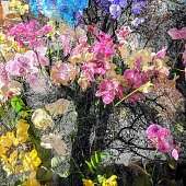 Vibrant or orchids burst from the wilderness.