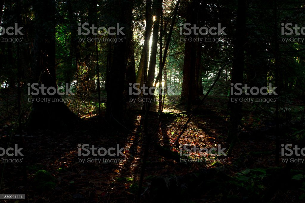Out of the Woods stock photo