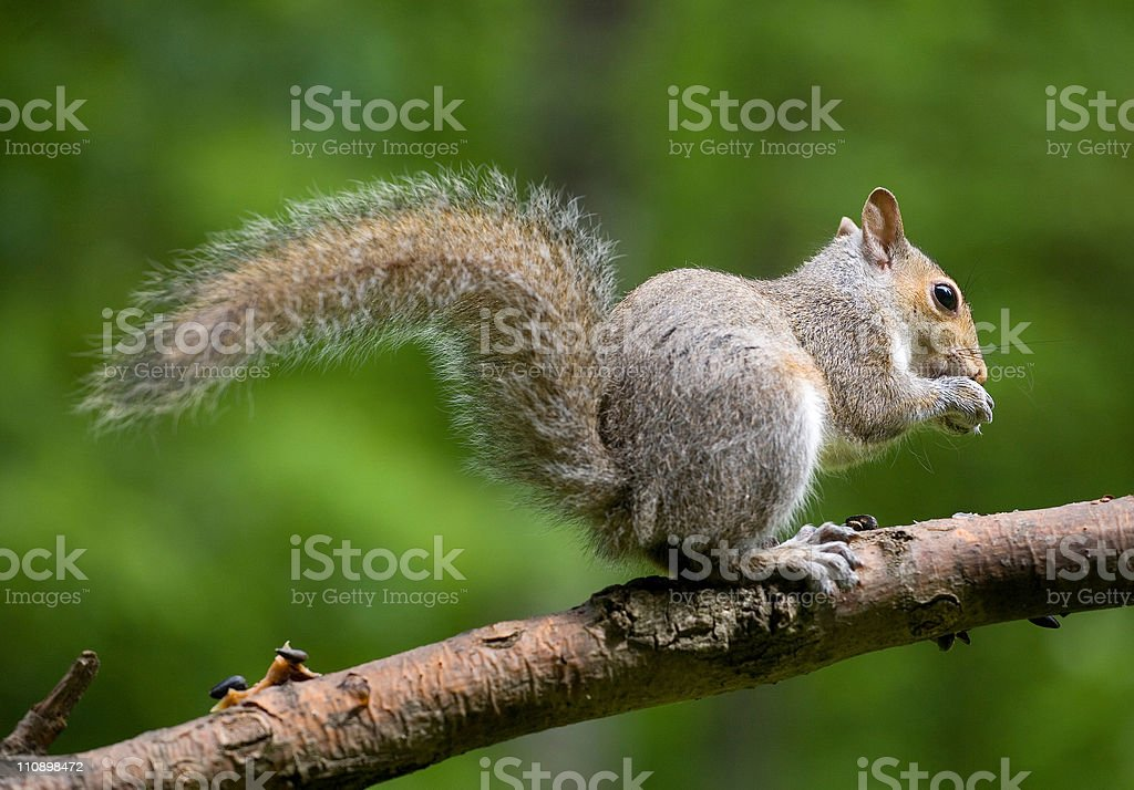 Out on a limb stock photo